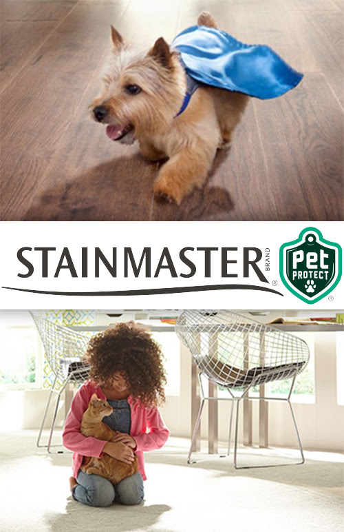 Pet-safe and worry-free flooring in Rochester, NY